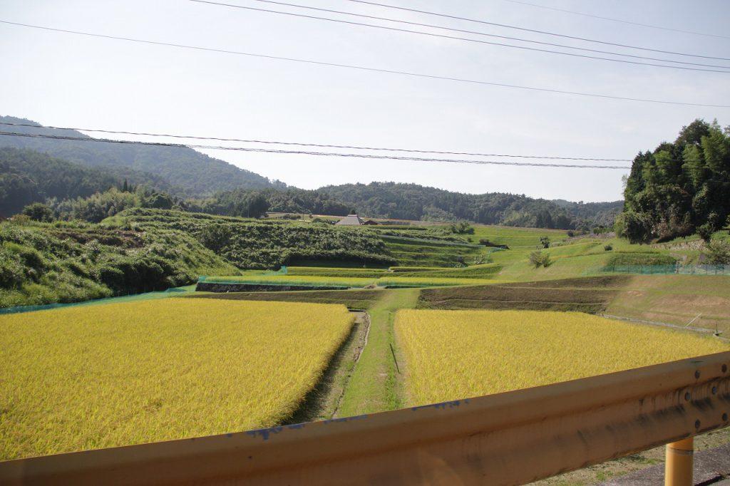獺祭から帰る途中の田んぼ