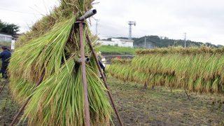 七賢・ふれあい自然塾「稲刈り」2018